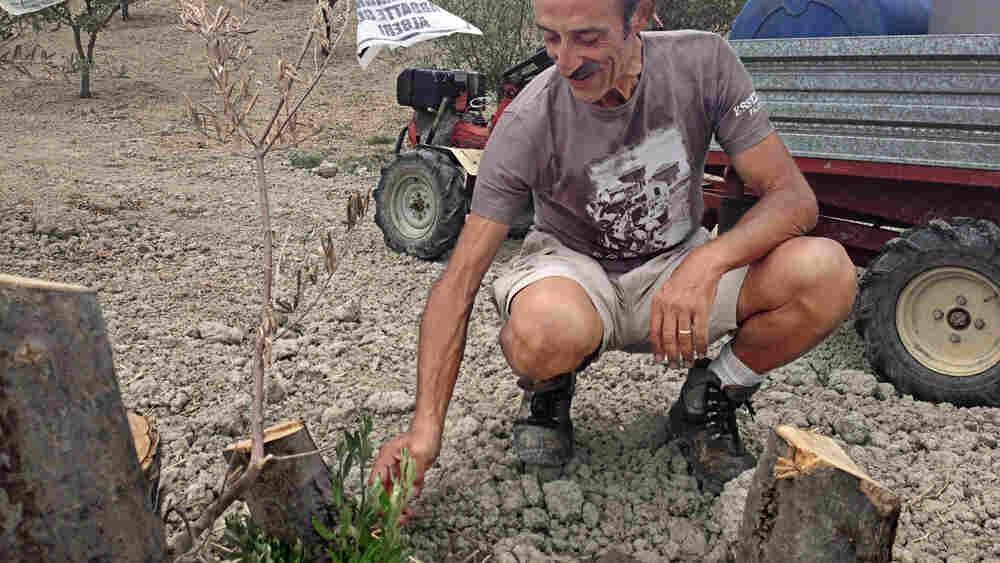 'Tough Guy' Farmers Stand Up To Italian Mafia — And Win