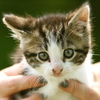 Who Says You Can't Train A Cat? A Book Of Tips For Feline-Human Harmony