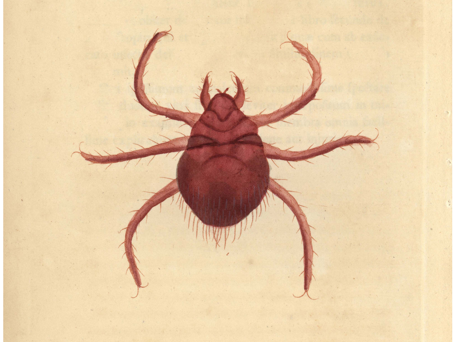 Unwelcome Surprise: A Disease-Spreading Chigger Turns Up In Chile