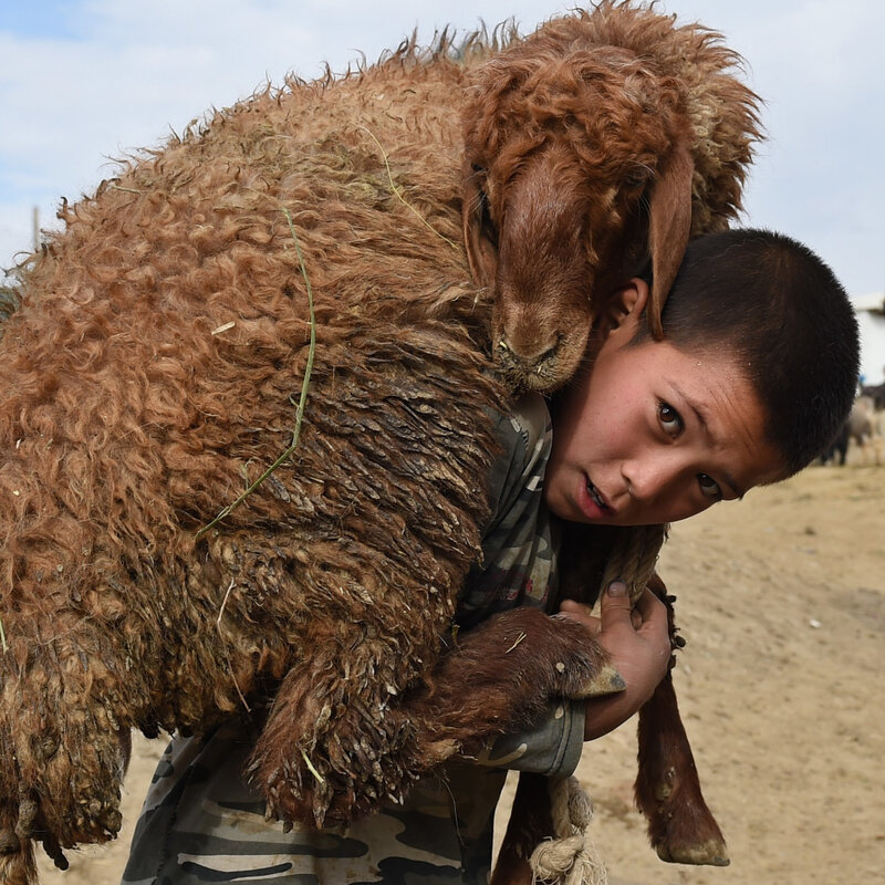 Eid Al-Adha Goats Cost More This Year Because Of Pakistan's Harsh