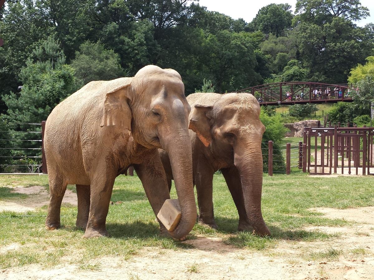 Episode 566 the zoo economy planet money npr for Elephant barcellona