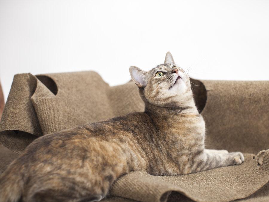 Episode 724: Cat Scam