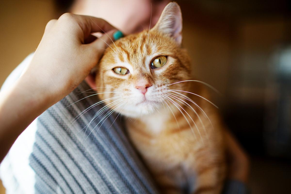 Cat Scratch Fever Funny Pics