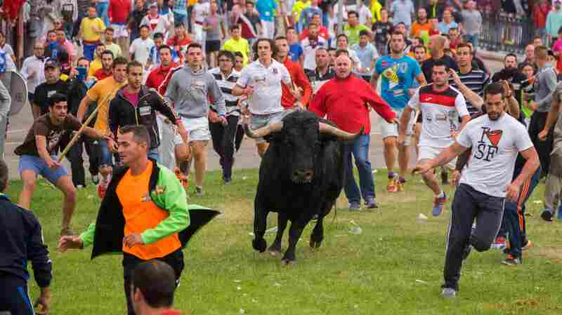Ending Centuries Of Tradition, A Bull Survives A Spanish Festival