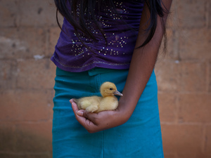 Gloria, 13, of Oaxaca, Mexico, holds a duck at home. Sexually abused by her father, she became a mother at the age of 12.