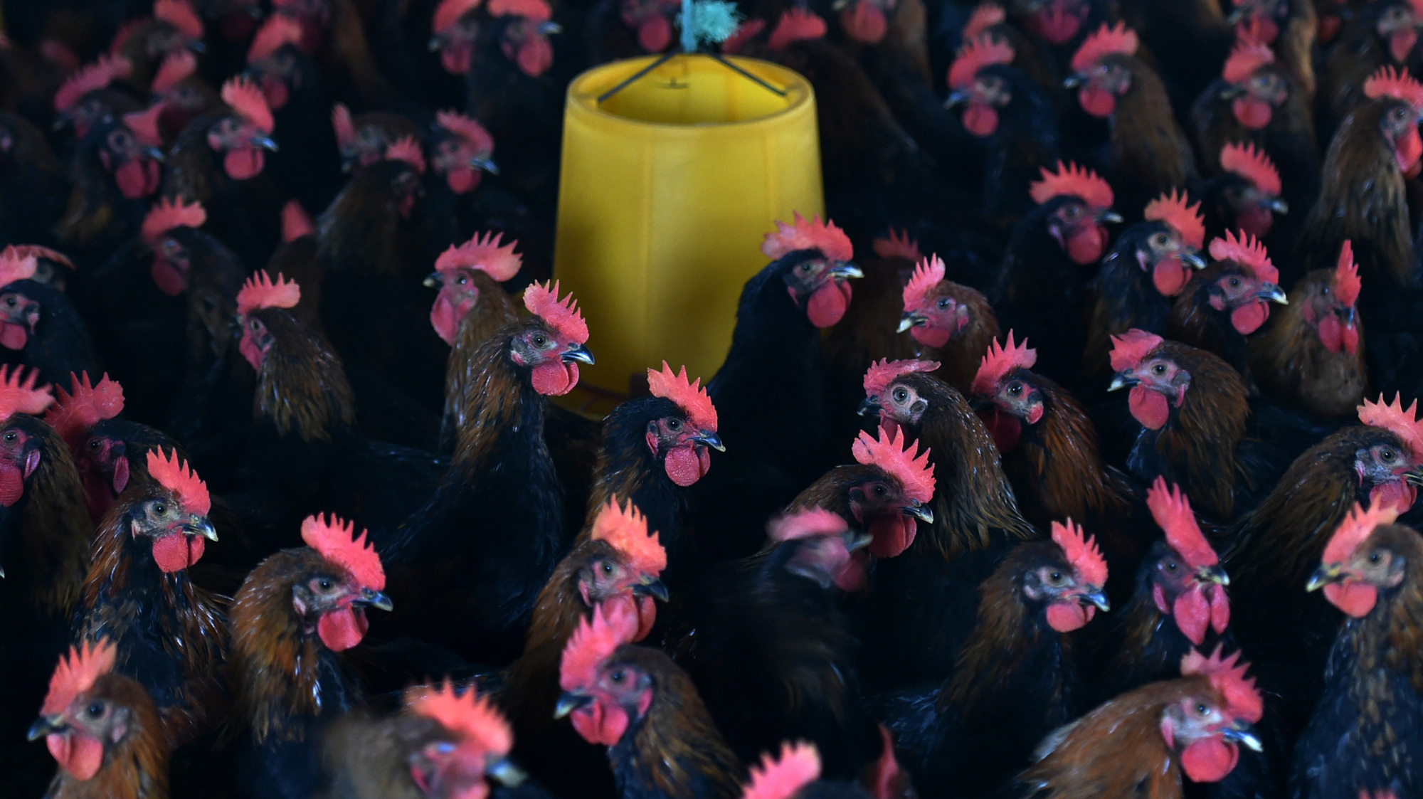 U.N. Pledges To Fight Antibiotic Resistance In Historic Agreement