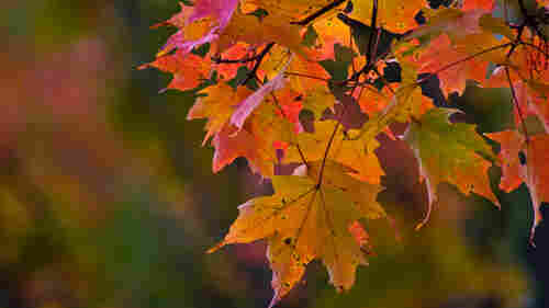 Feel the autumnal vibes with a playlist that'll get you in the mood for the changing seasons.