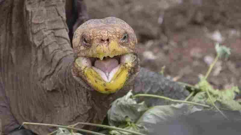 NPR News Nuggets: All Love Lost, Tortoise Species Saved & Big Bucks In Texas
