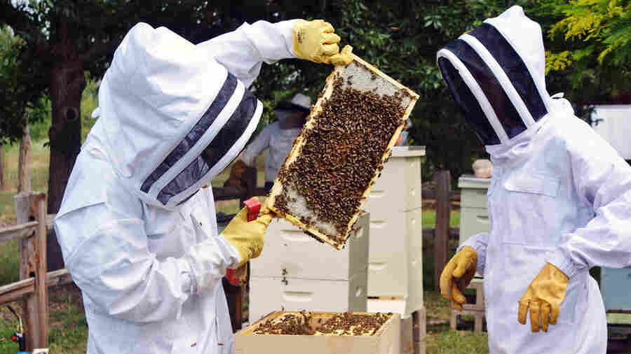 Beekeepers Benefit From The Hive Mind In Community Apiaries