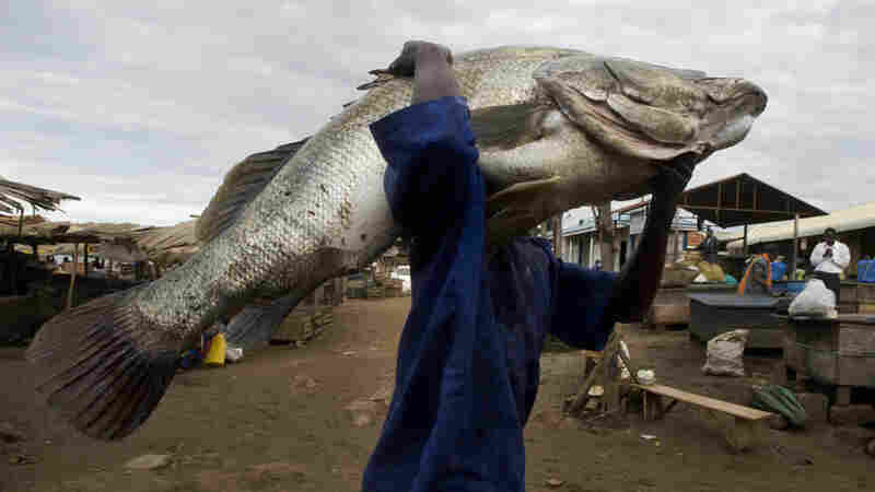 Why A Really Big Fish Isn't Always Good For Business