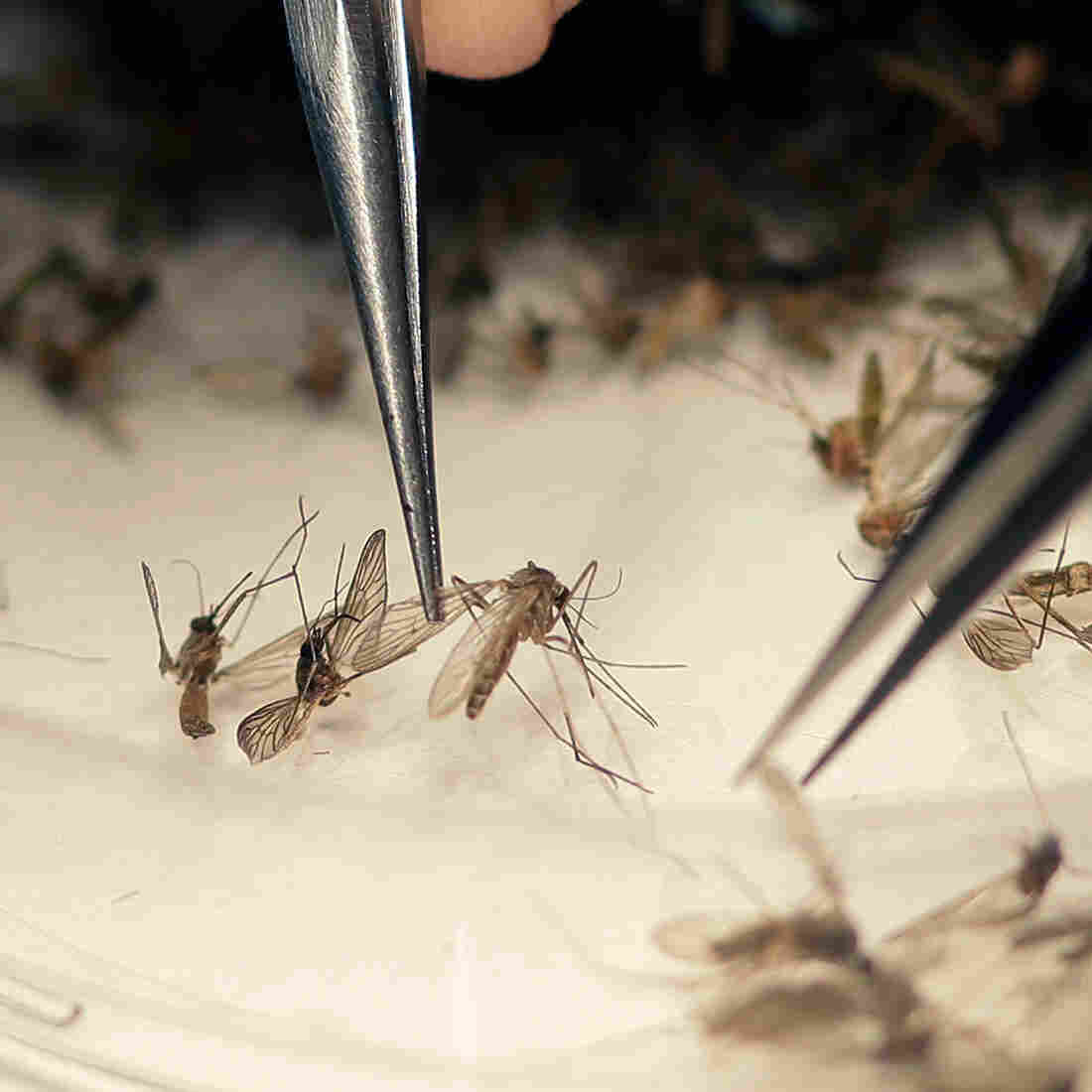 Congress Ends Spat, Agrees To Fund $  1.1 Billion To Combat Zika