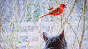 Stakes Grow Higher In The Cat-Bird Wars