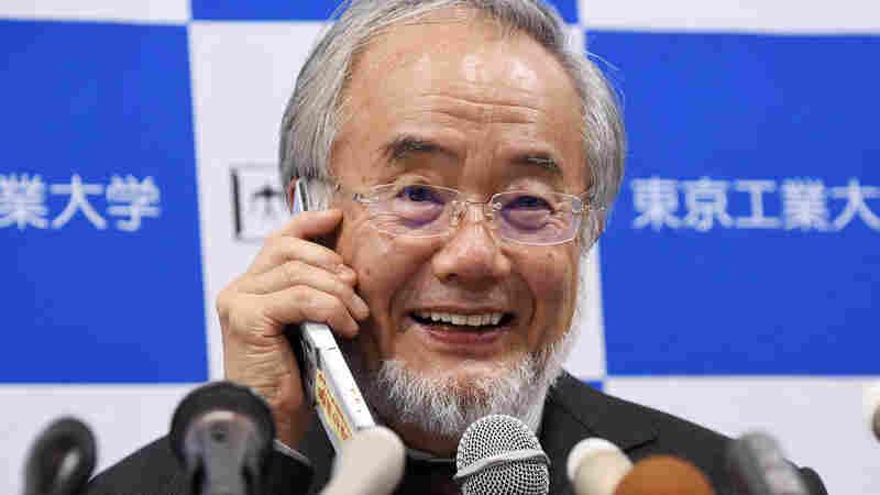 Japanese Biologist Wins Nobel Prize In Physiology Or Medicine