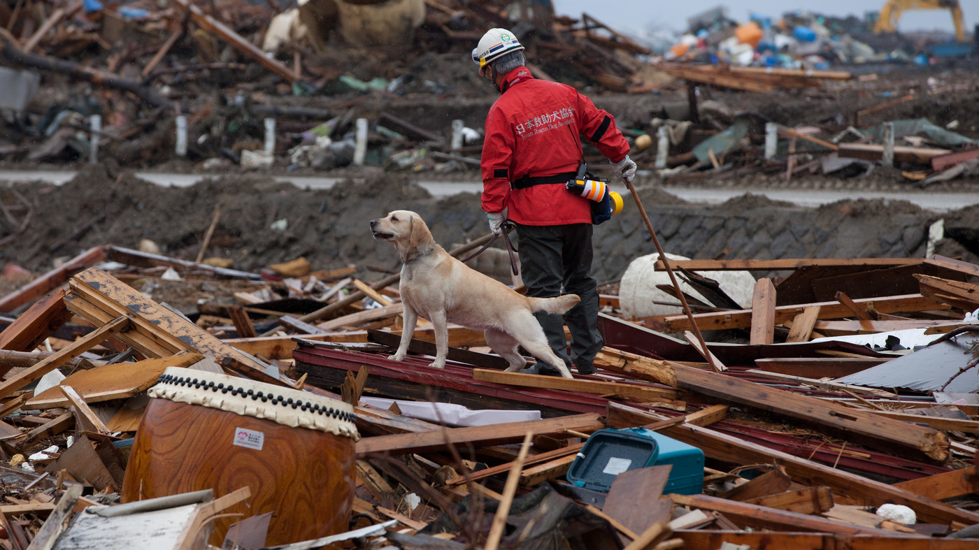 from fire hydrants to rescue work  dogs perceive the world