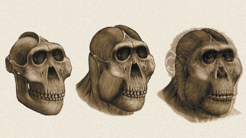Dental Detectives: What Fossil Teeth Reveal About Ancestral