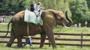 TripAdvisor Stops Selling Tickets To Many Wildlife Attractions