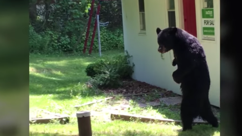 Internet Mourns Apparent Death Of Pedals, A Real Stand-Up Bear