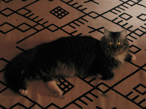 Moshe the cat lives in an old Washington, D.C., house with his owner, Cassandra Slack.