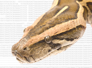 Burmese python and the DNA sequence responsible for limb loss.