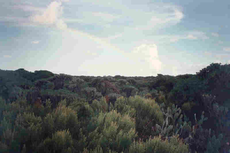 These photographs were produced by Paula Sprenger and Carter McCormick during their month-long artist residency at Dry Tortugas National Park in Florida.