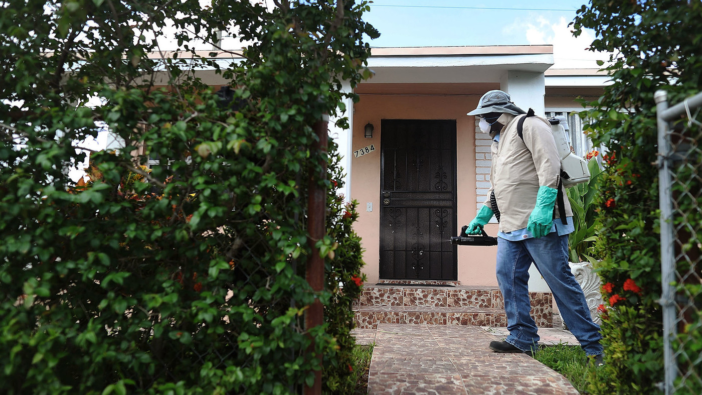 zika may be in the u s to stay shots health news npr