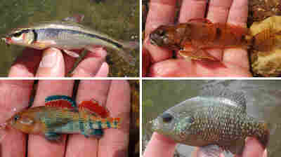 Little Fish Tales: Micro Fishers Focus On The Species, Not Size