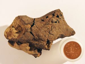The rock was found on a British beach. Scientists believe it could contain fossilized brain tissue.