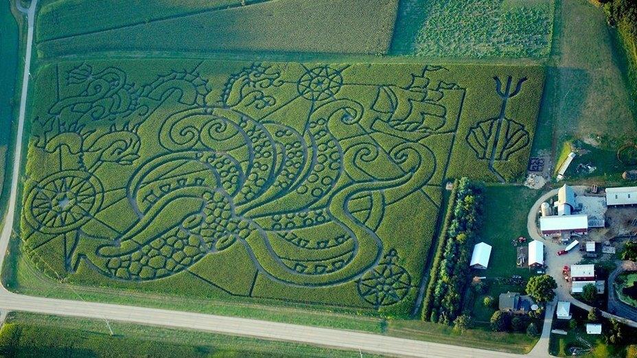 farmers create elaborate corn mazes to bring in cash the salt npr