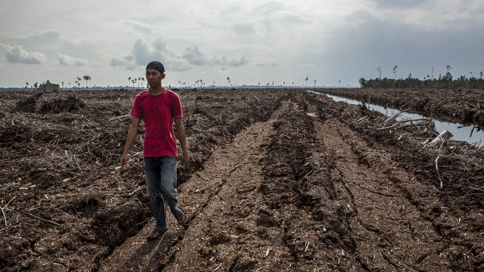 This peat soil in Sumatra, Indonesia, was formerly a forest. Clearing and draining such land releases huge amounts of greenhouse gases. (Ulet Ifansasti/Getty Images)