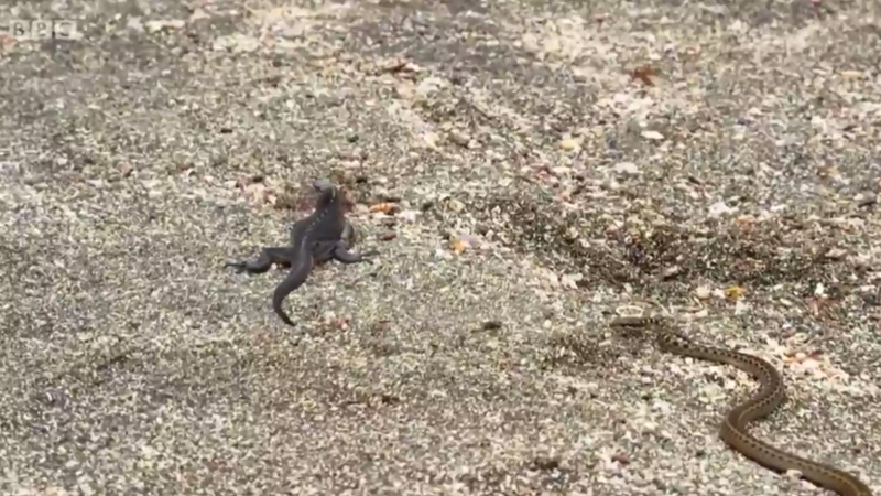 With Election Anxiety At Its Peak, Check Out Terrifying Video From Animal World