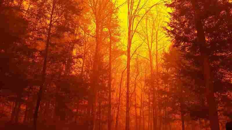 Wildfires Still Burn In Tennessee As Death Toll Rises To At Least 7