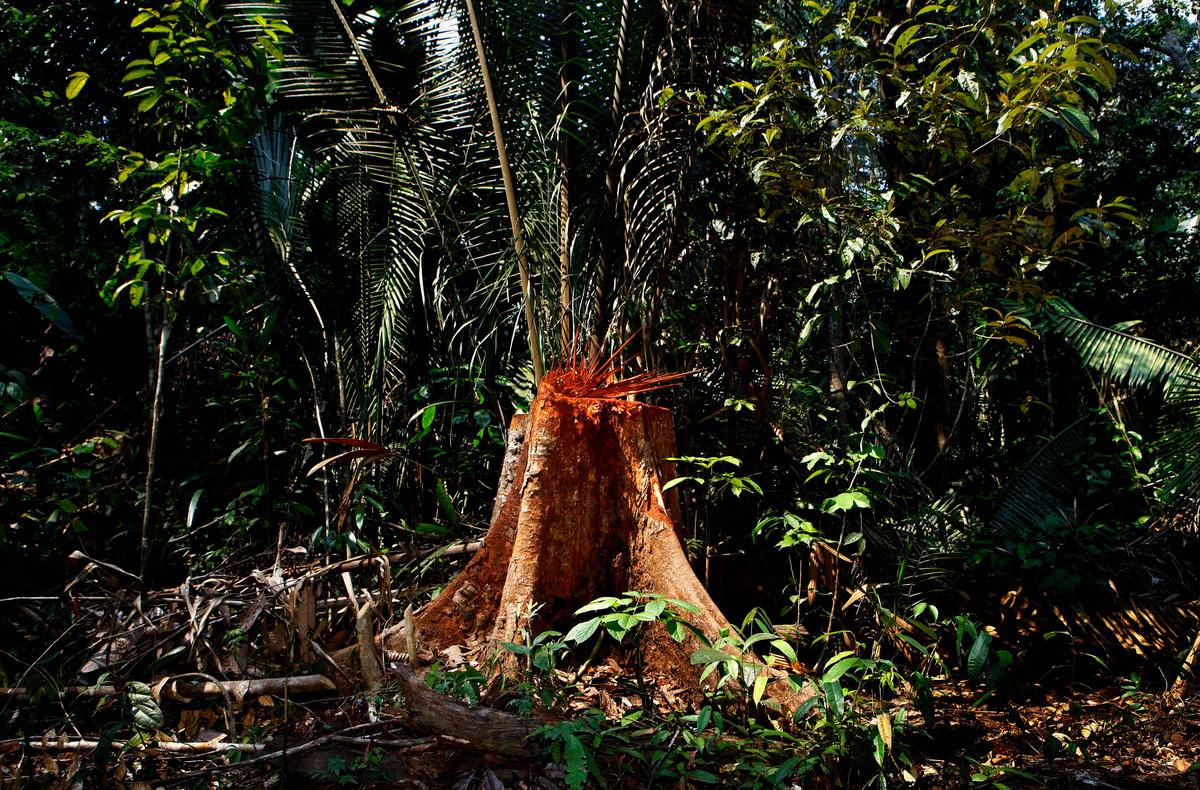 amazon rainforest deforestation case study · link ---- amazon rainforest deforestation case study essay writing service - essayeruditecom ap world compare and contrast essay animals in literature essay b.