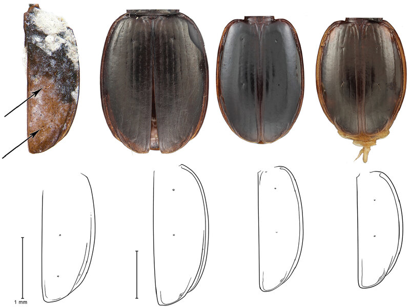 Antarctic Beetle Species Discovery Doubles As Birthday Gift To Scientists Mentor The Two Way NPR