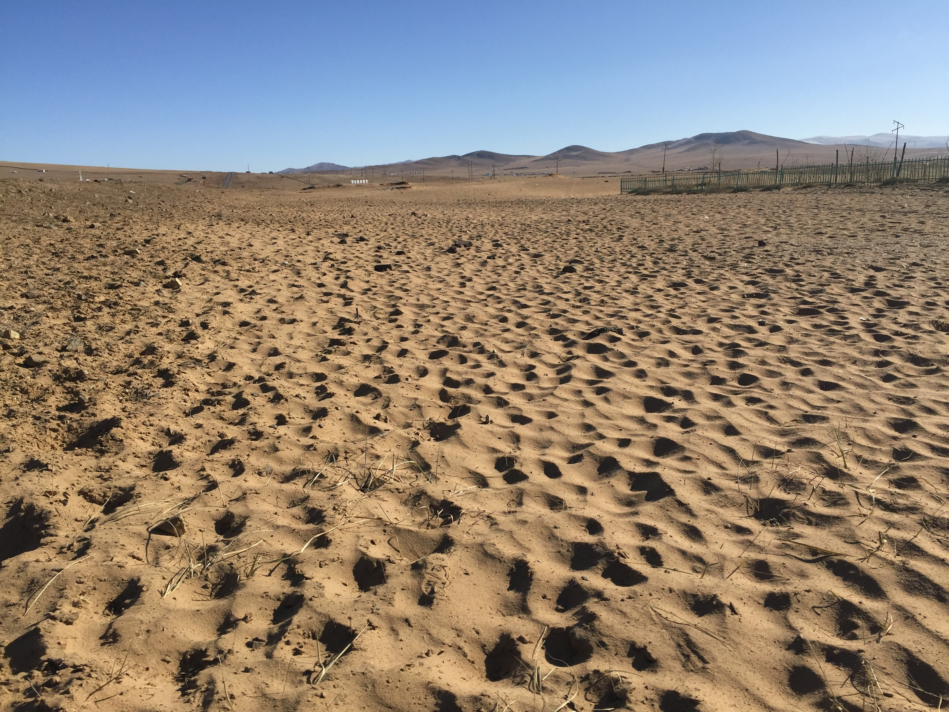In the place where Bish has pitched her ger, or tent, the effects of overgrazing are obvious. Sand dunes appear where grass used to grow. Rob Schmitz/NPR.