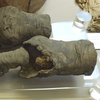 Researchers Confident Mysterious Pair Of Mummified Knees Belonged To Queen Nefertari