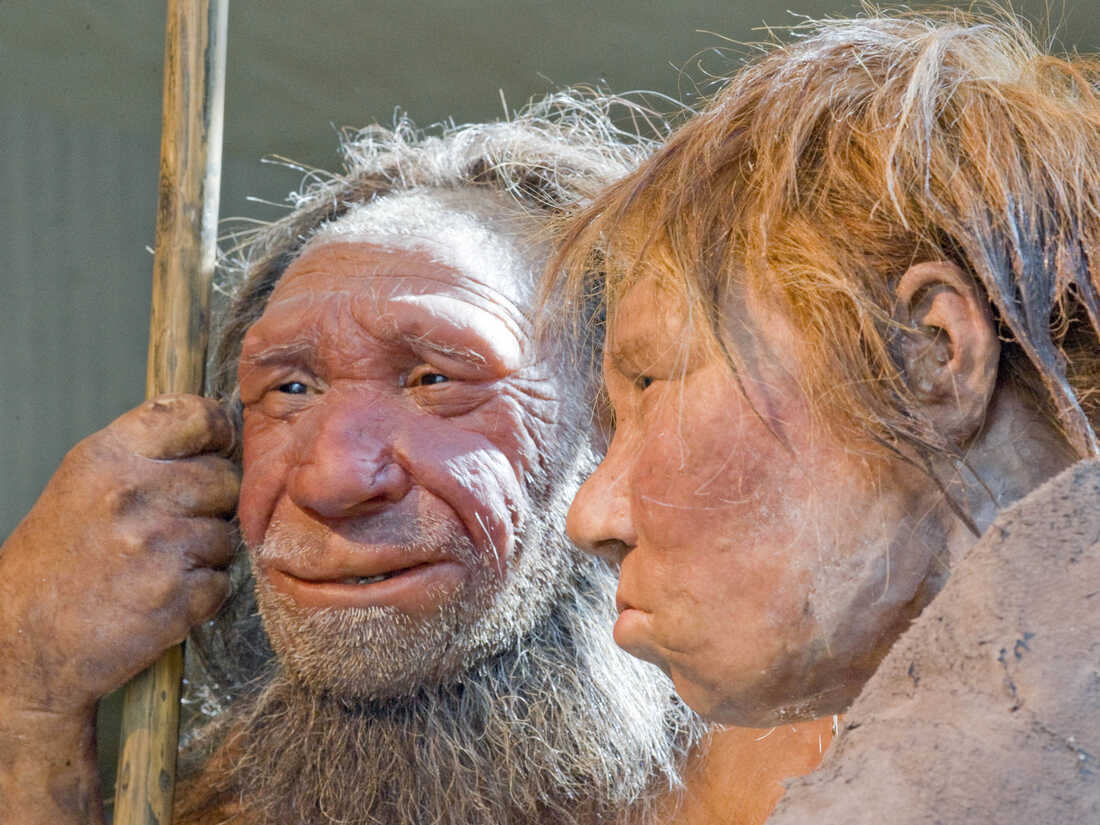Reconstructions of a Neanderthal man (left) and woman at the Neanderthal Museum in Mettmann, Germany.