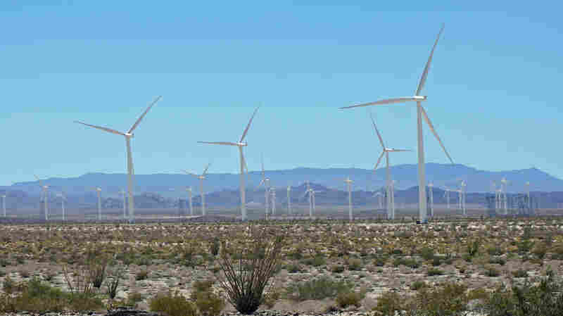 Renewable Energy Sector Remains Optimistic Amid Trump Policy Outlook