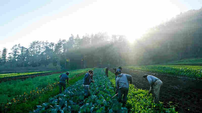 Big Battles Over Farm And Food Policies May Be Brewing As Trump Era Begins