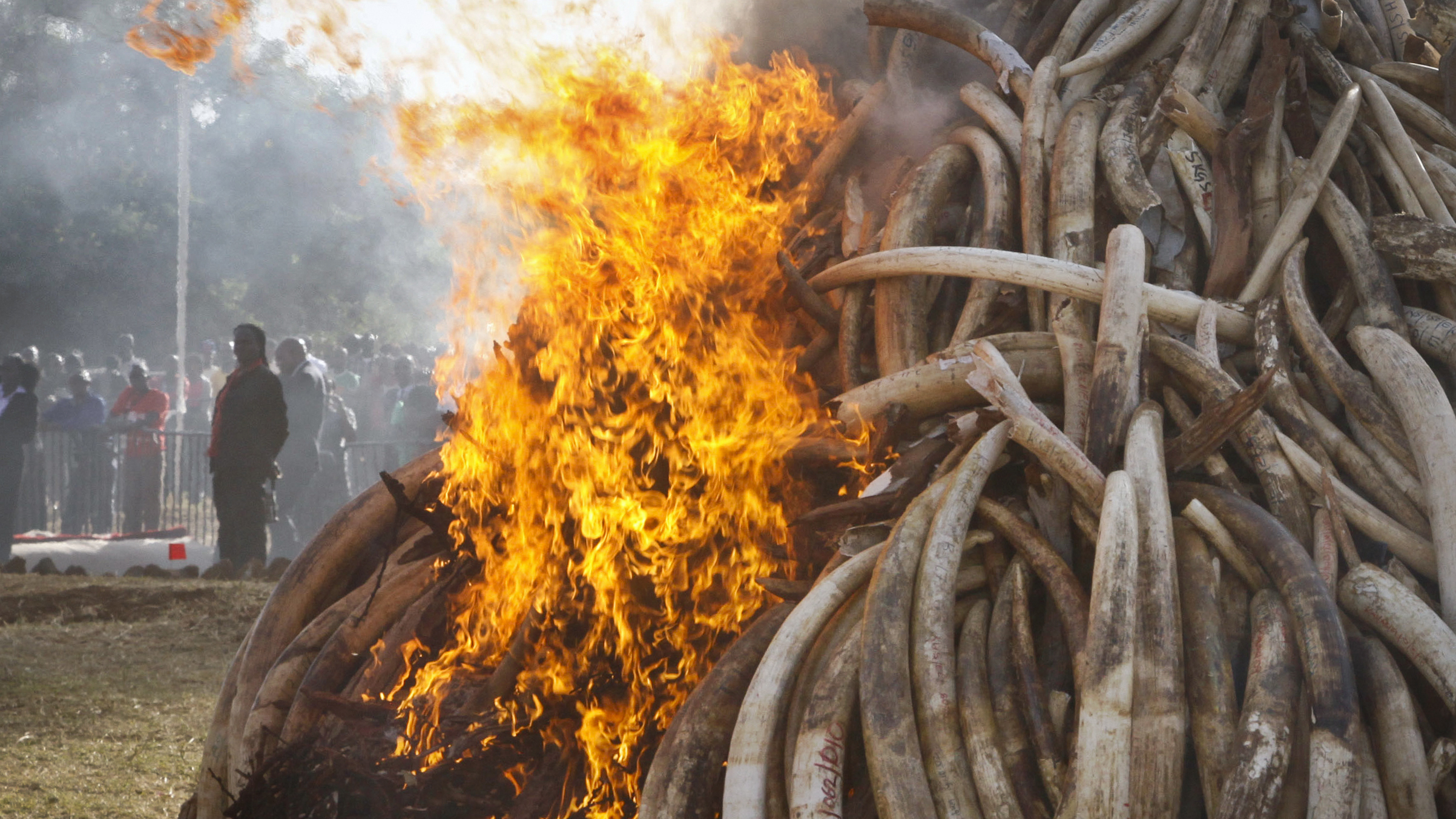 China Says It Will Shut Down Its Ivory Trade in 2017
