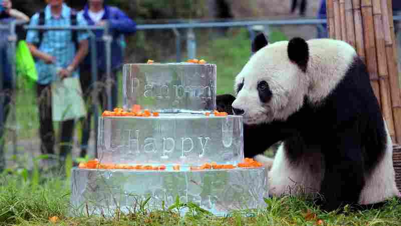 'Panda Grandpa' Pan Pan Dies In China