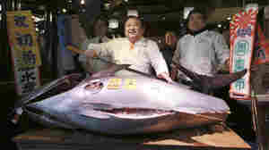 A Big Fish Sells For Over Half A Million — But Other Big Questions Persist