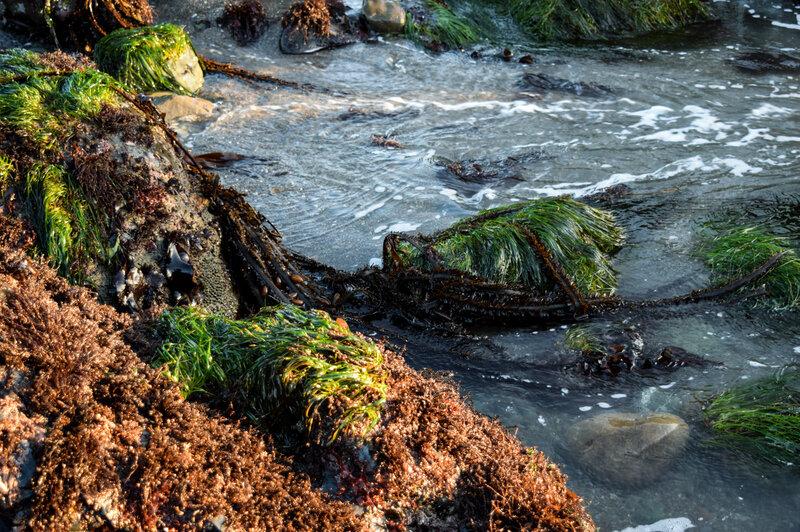 Bountiful Beach Buffet: Fresh Seaweed Is Making Waves Among