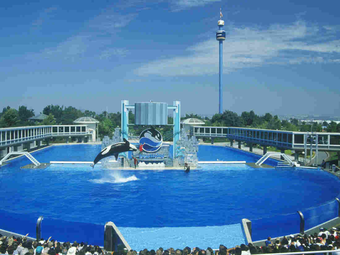 Tilikum, killer whale from Blackfish, dies at SeaWorld Orlando