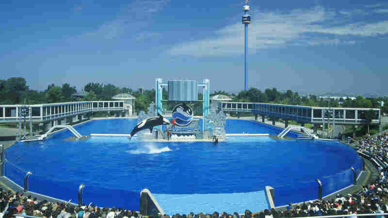 SeaWorld Ends Its Orca Theatrics In San Diego, But Critics Aren't Convinced