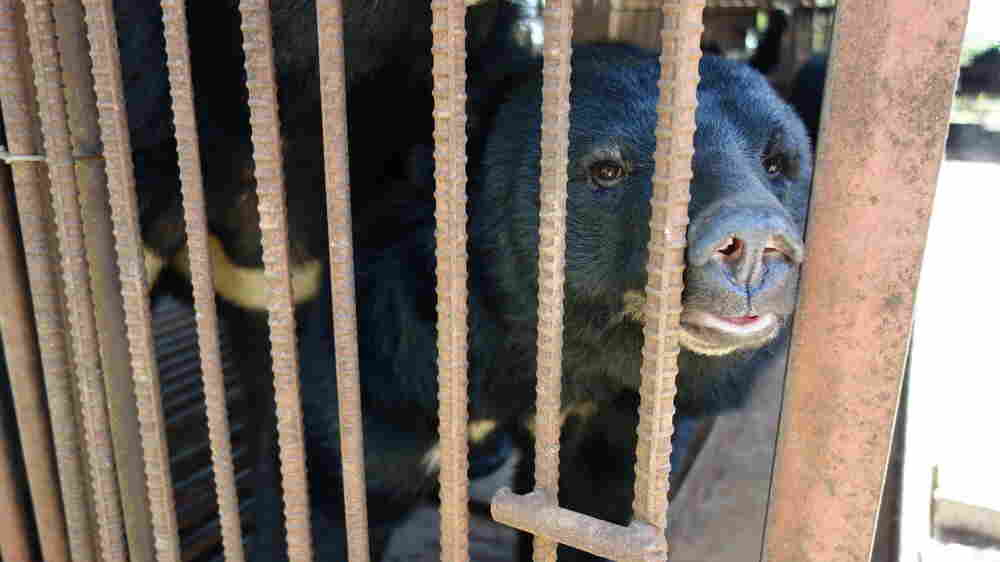 Bears That Inspired 'Adorable' Korean Paralympic Mascot Live In Caged Captivity