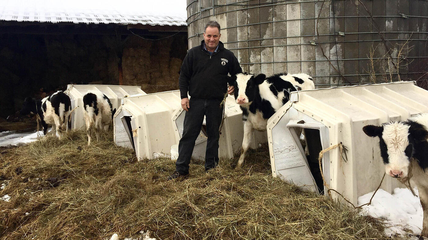 As big milk moves in family owned u s dairy farms rapidly fold