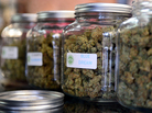 """The highly rated variety of medical marijuana known as  """"Blue Dream"""" was displayed among other strains at a cannabis farmers market in Los Angeles in 2014."""