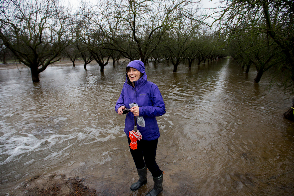 Helen Dahlke, a scientist from the University of California, Davis, stands in an almond orchard outside Modesto that's being deliberately flooded. This experiment is examining how flooding farmland in the winter can help replenish the state's depleted aquifers. (Joe Proudman/Joe Proudman / Courtesy of UC Davis)