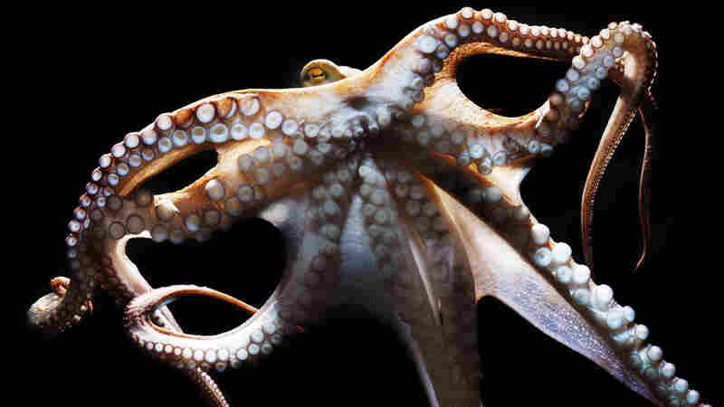 Philosophy In The Octopus's Garden