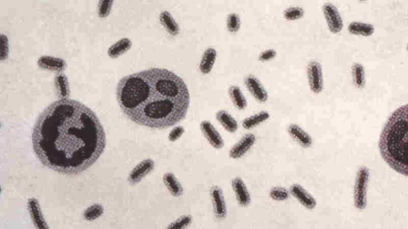 A Superbug That Resisted 26 Antibiotics